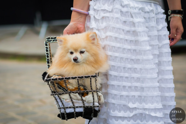Little dog in Chanel shopping cart before Chanel couture show